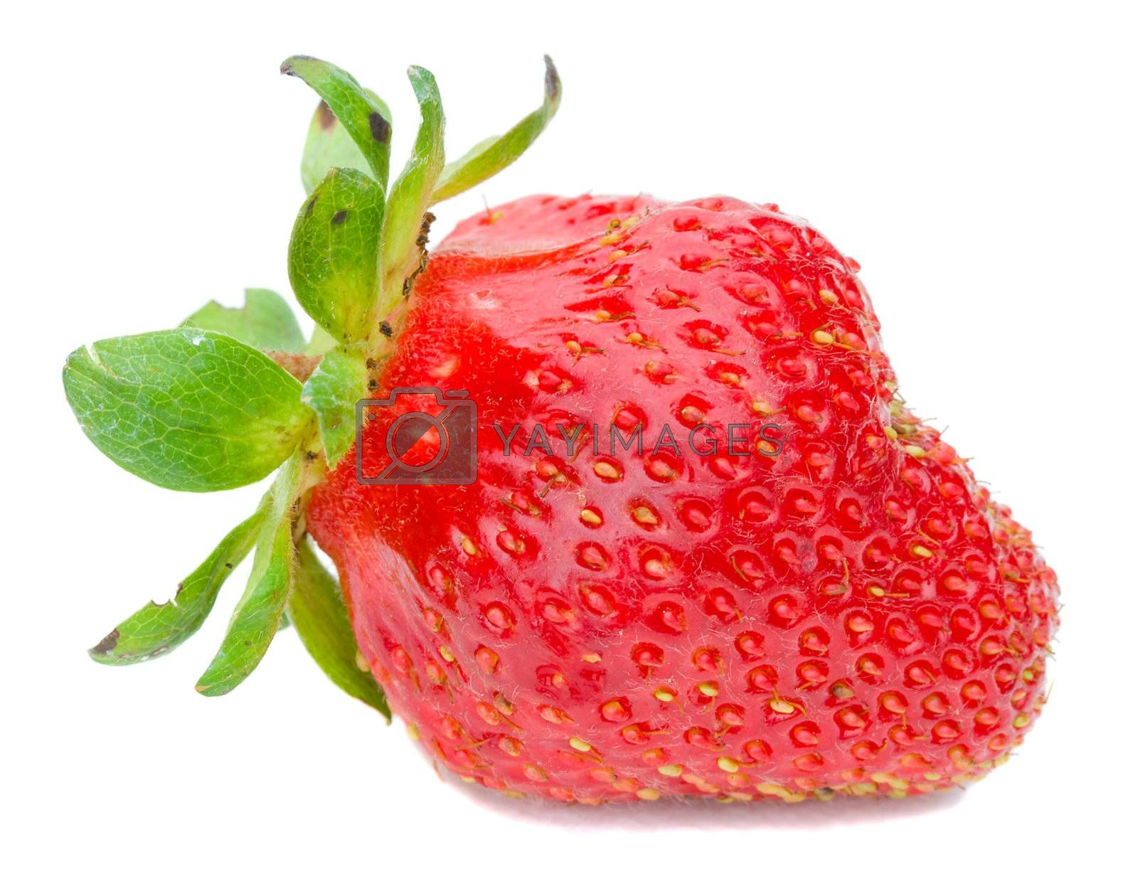 big single strawberry by Alekcey
