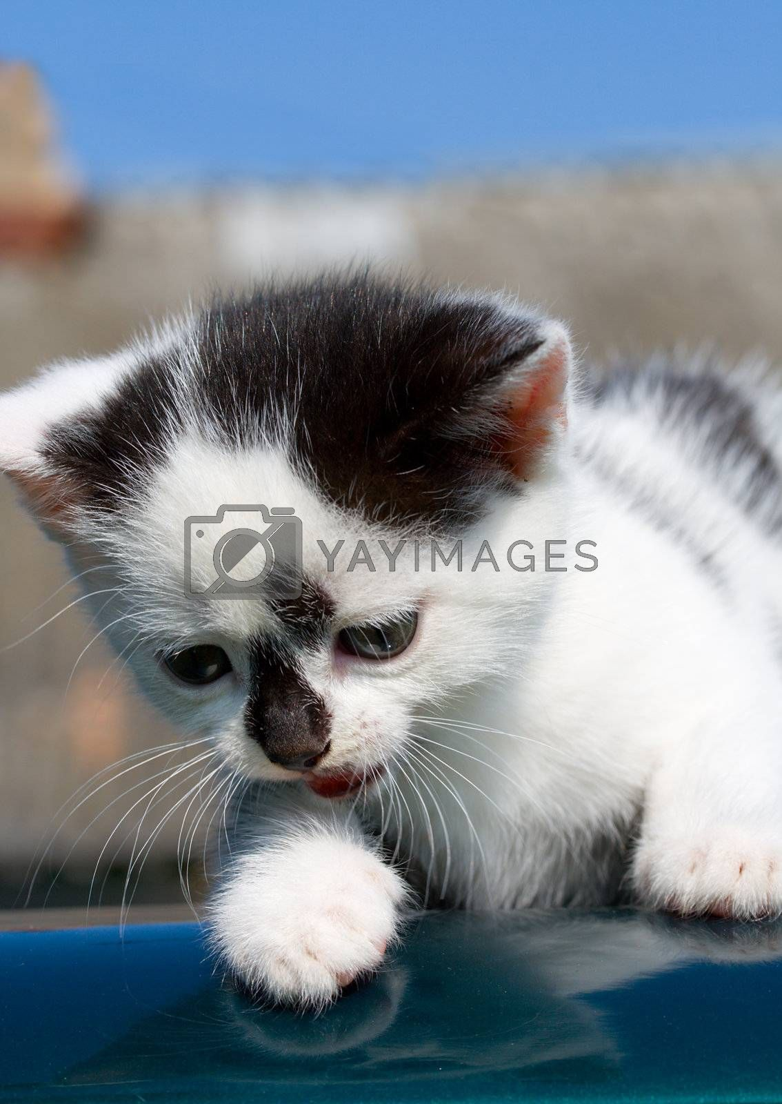 kitten lying on car by Alekcey