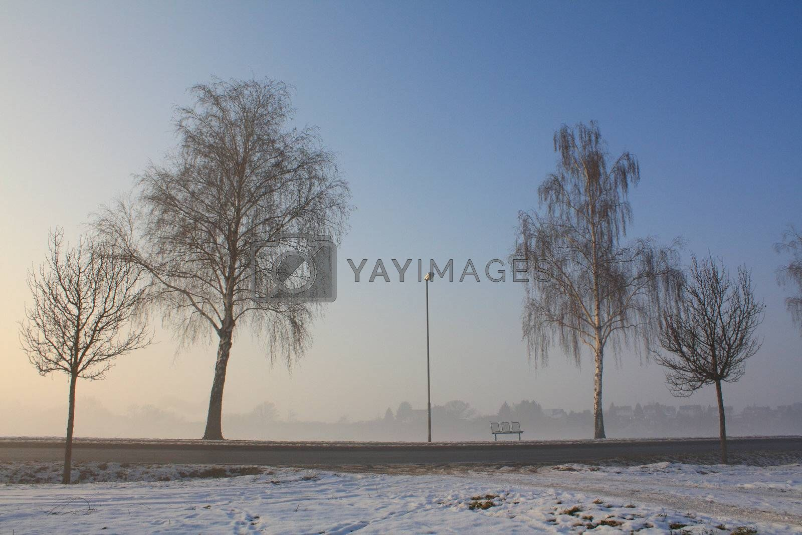 snow field in fog by msphotosite