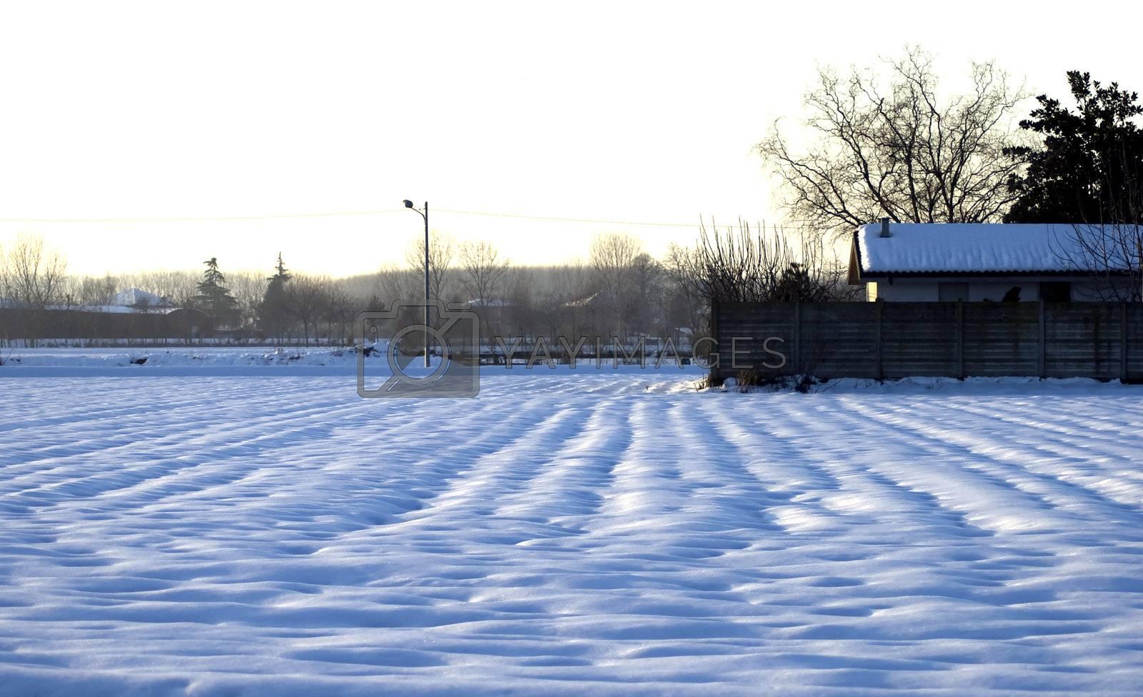 Snow by Koufax73