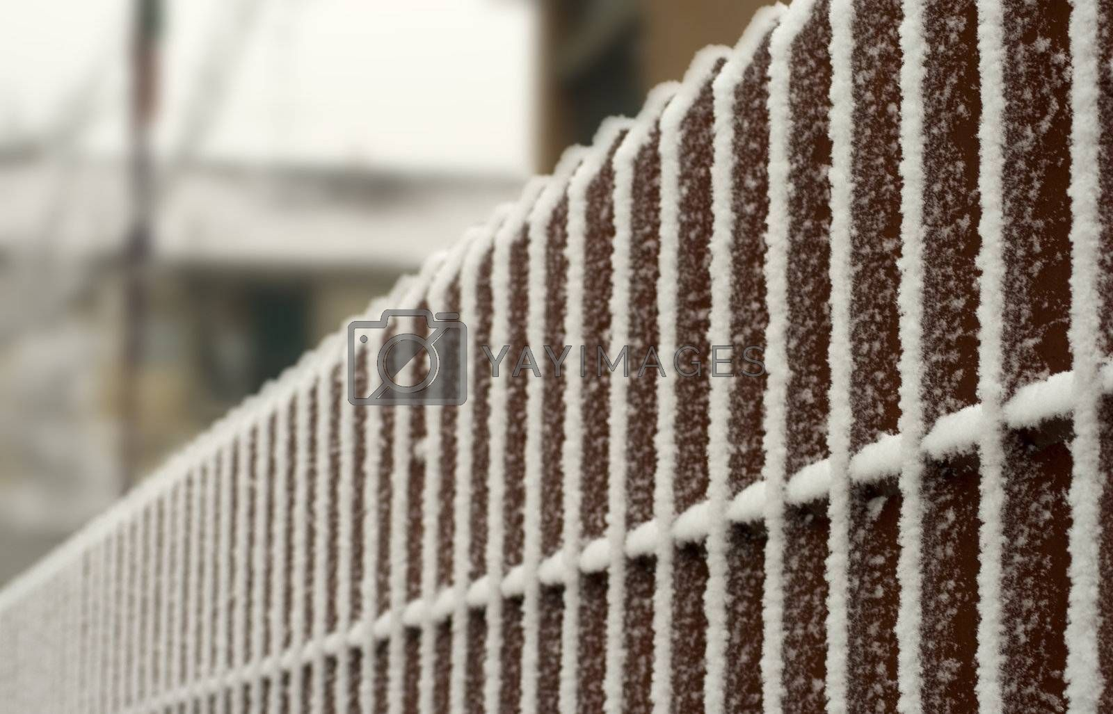 Snow on vertical bar of a fence by Koufax73