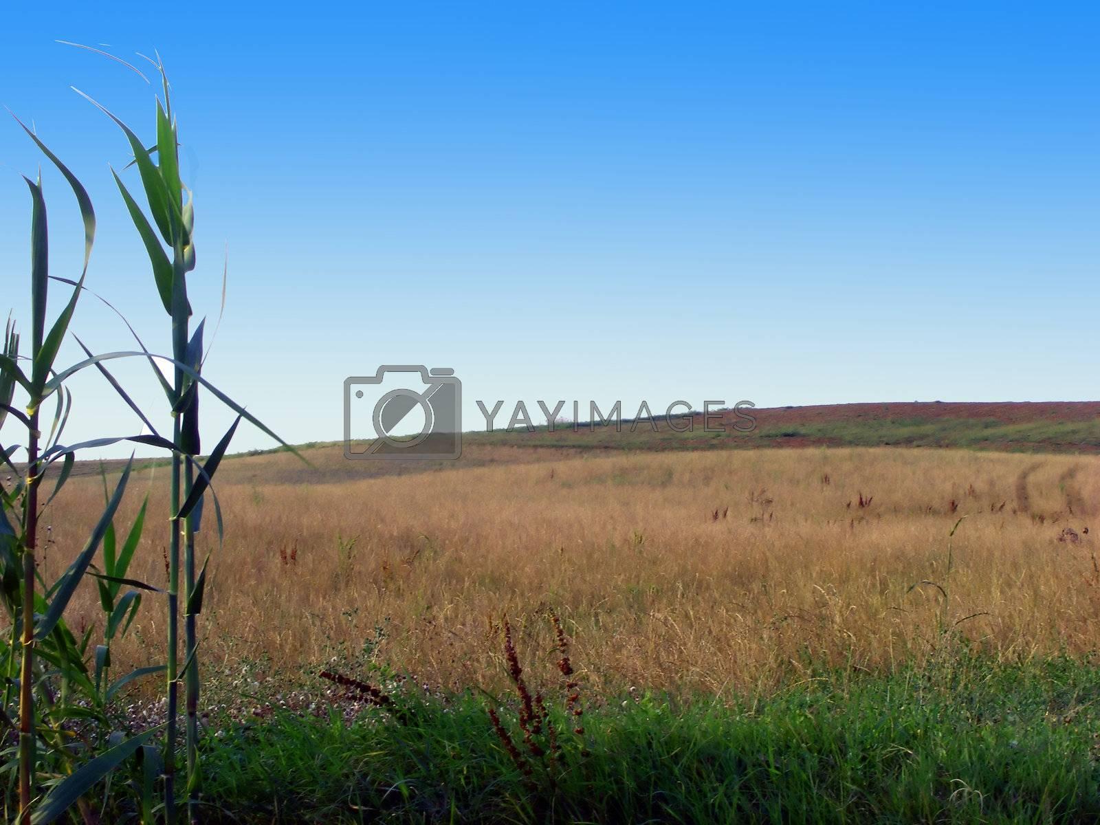 Fields by Koufax73