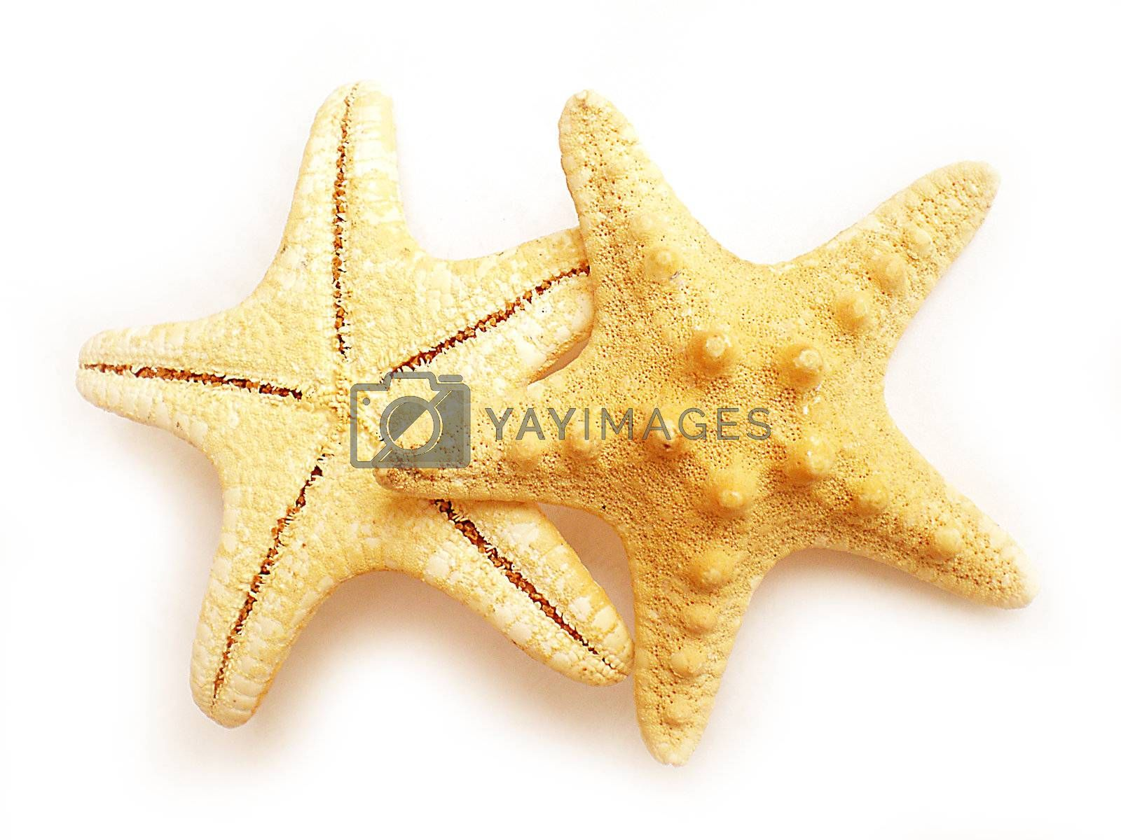 Royalty free image of starfish by Dessie_bg