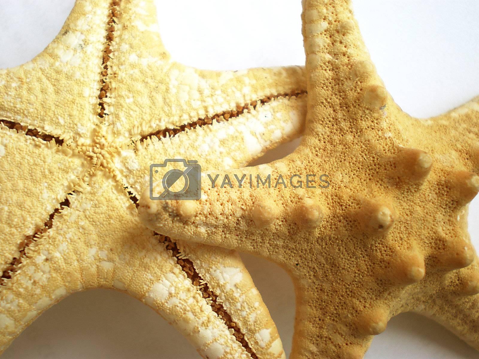 starfish by Dessie_bg
