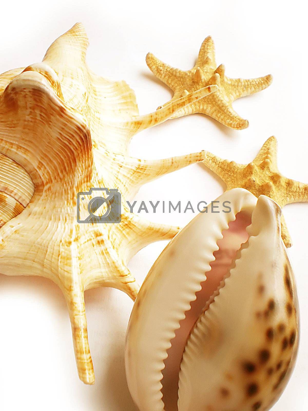 shells by Dessie_bg