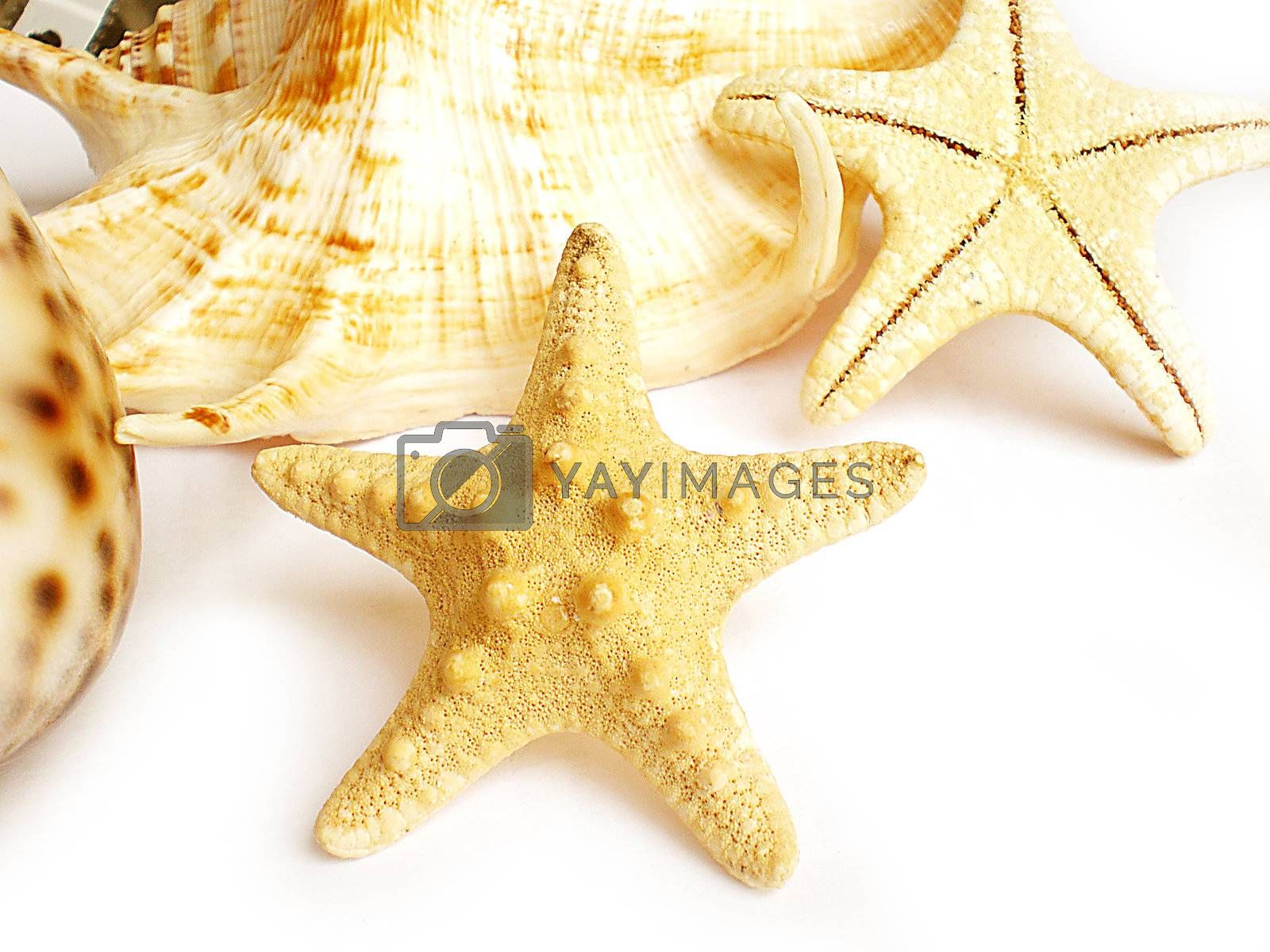 starfish by Dessie_bg