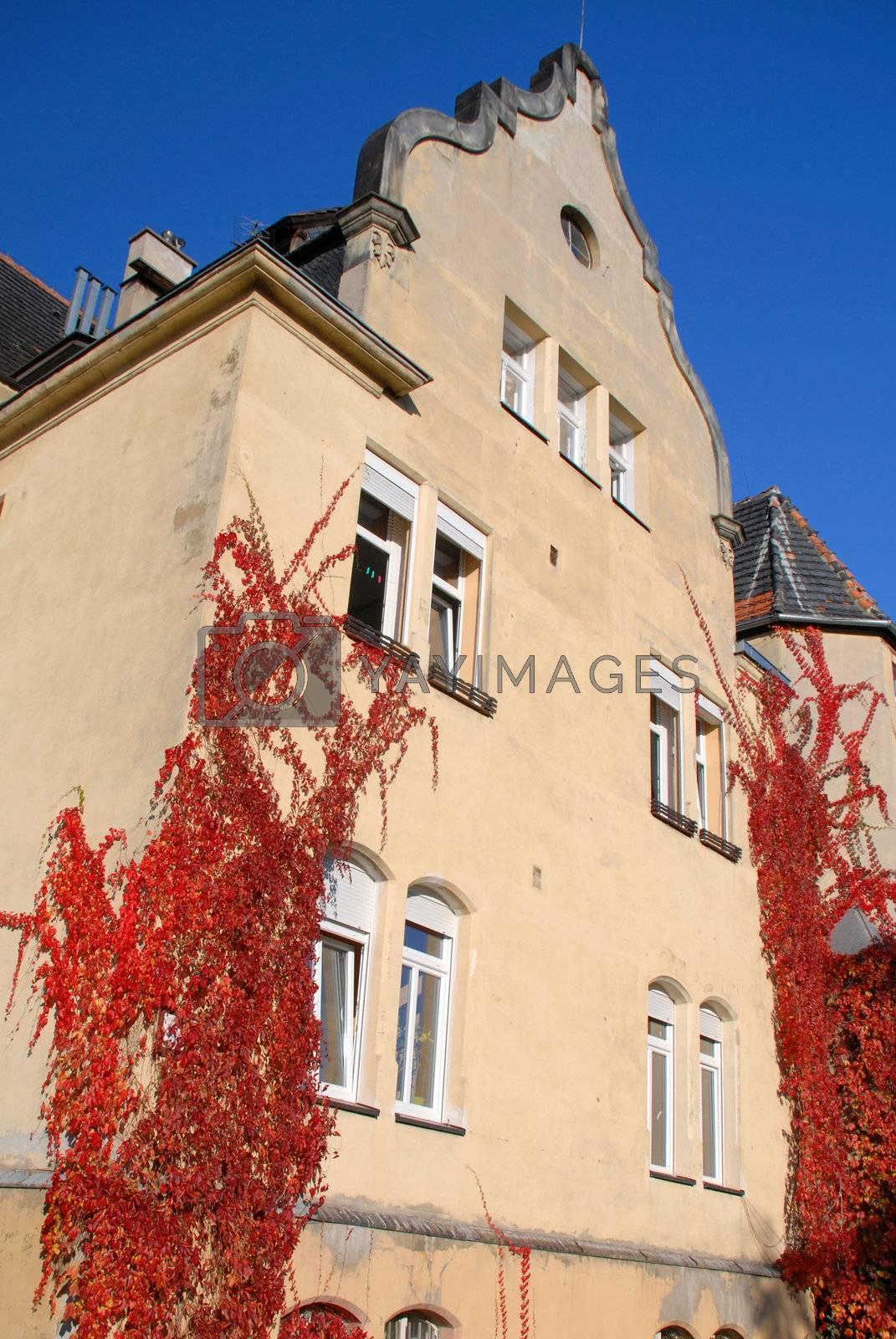 Building overgrown ivy autumn. by wojciechkozlowski