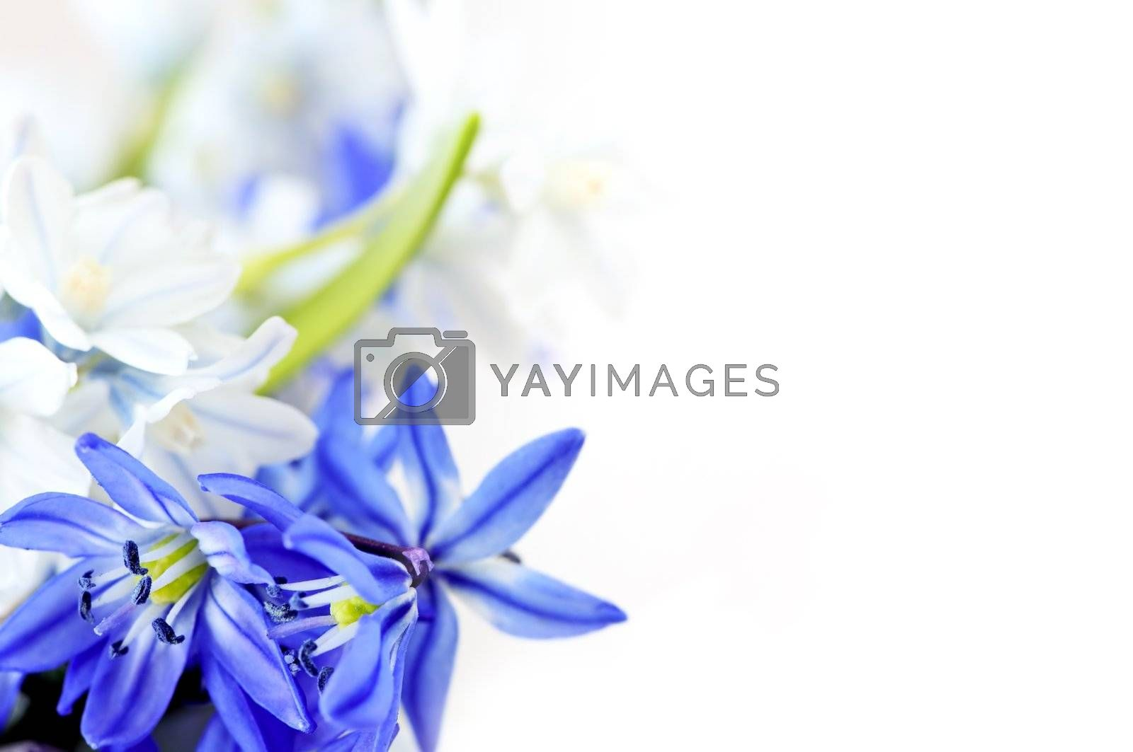 Spring flowers background by elenathewise