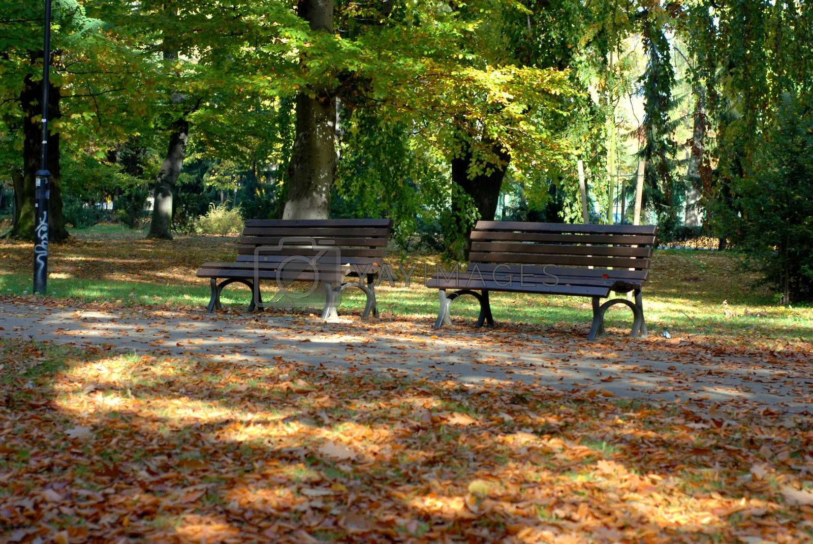 Royalty free image of Benches in the park, Autumn season. by wojciechkozlowski