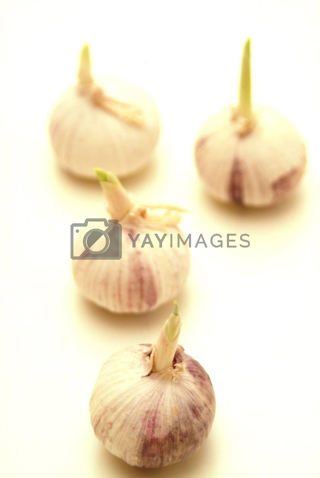 some garlic on a bright background  by Szakaly