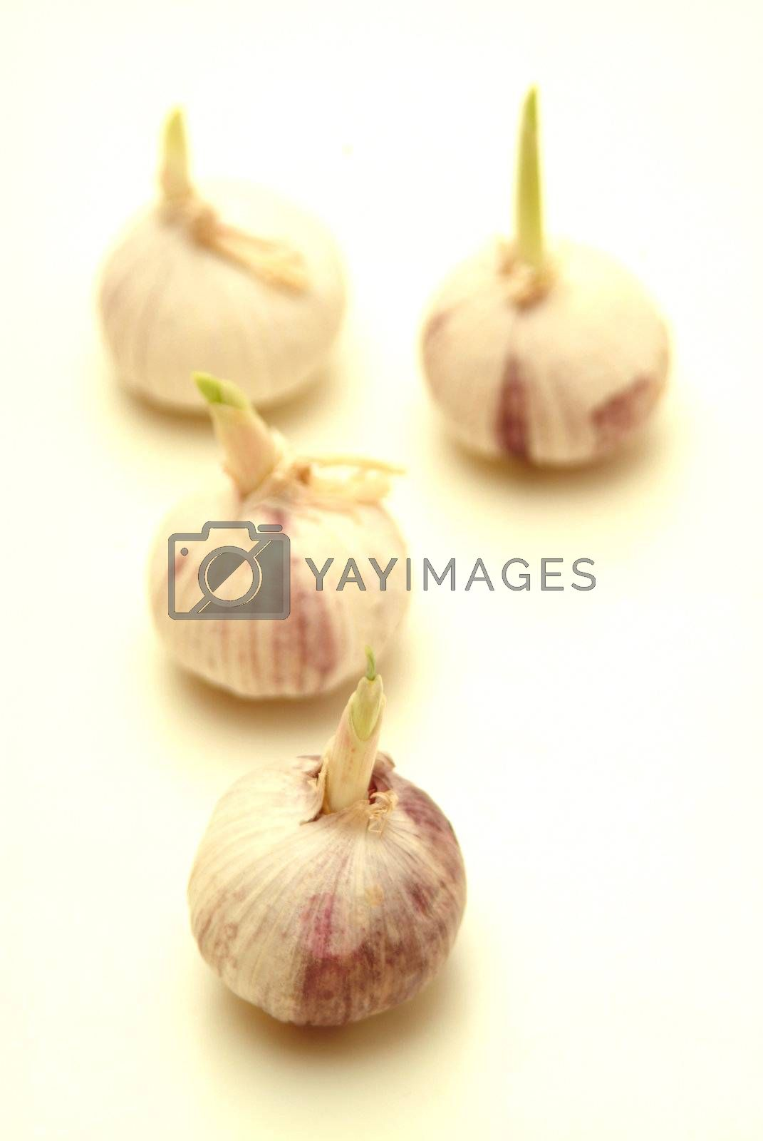 Royalty free image of some garlic on a bright background  by Szakaly