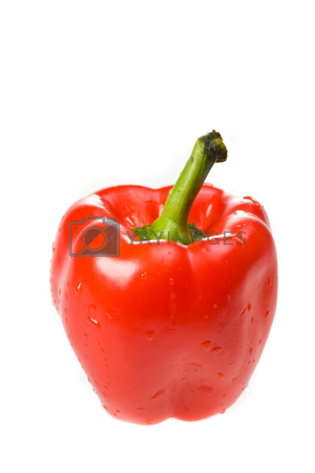 single red bell pepper on white background