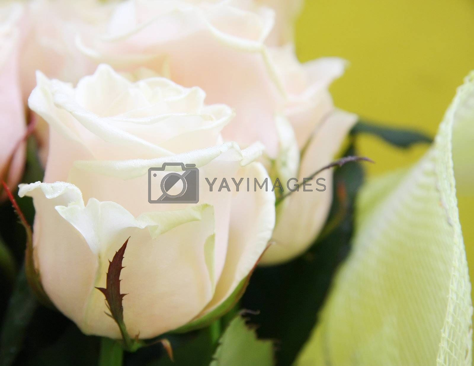 Royalty free image of Beautiful wedding bunch of pale pink roses by rozhenyuk