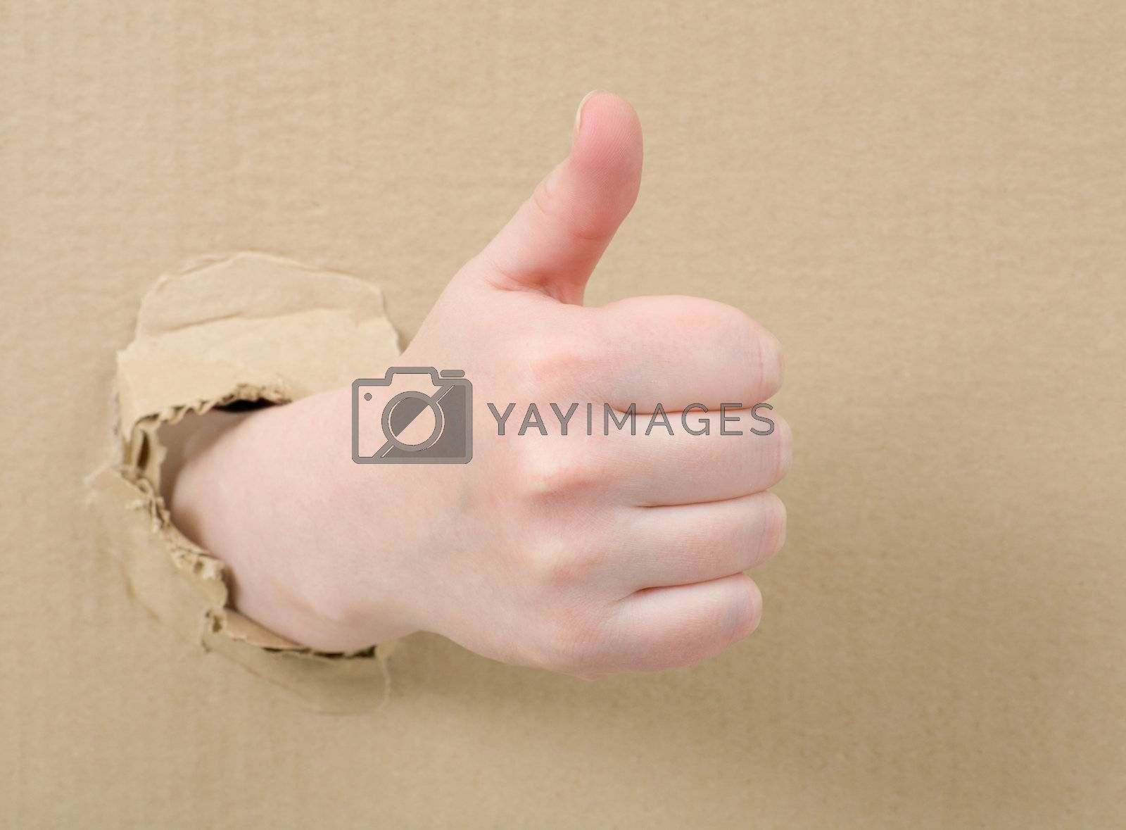 Royalty free image of Thumb up by pzaxe