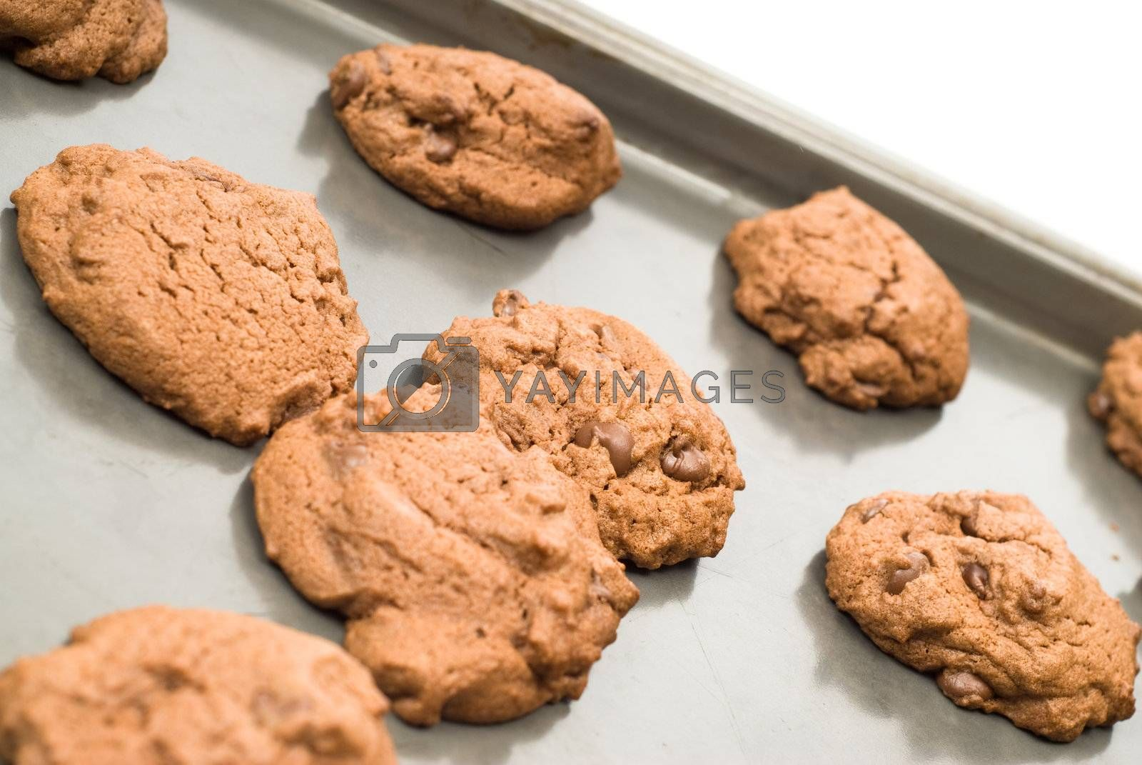 Royalty free image of Homemade Chocolate Chip Cookies by dragon_fang