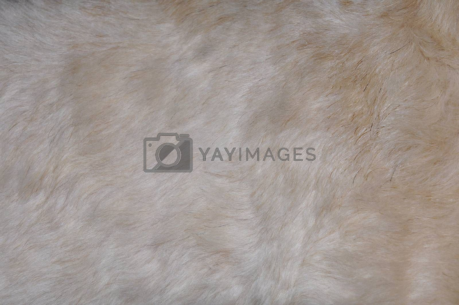 Royalty free image of dog hair abstract by cfarmer