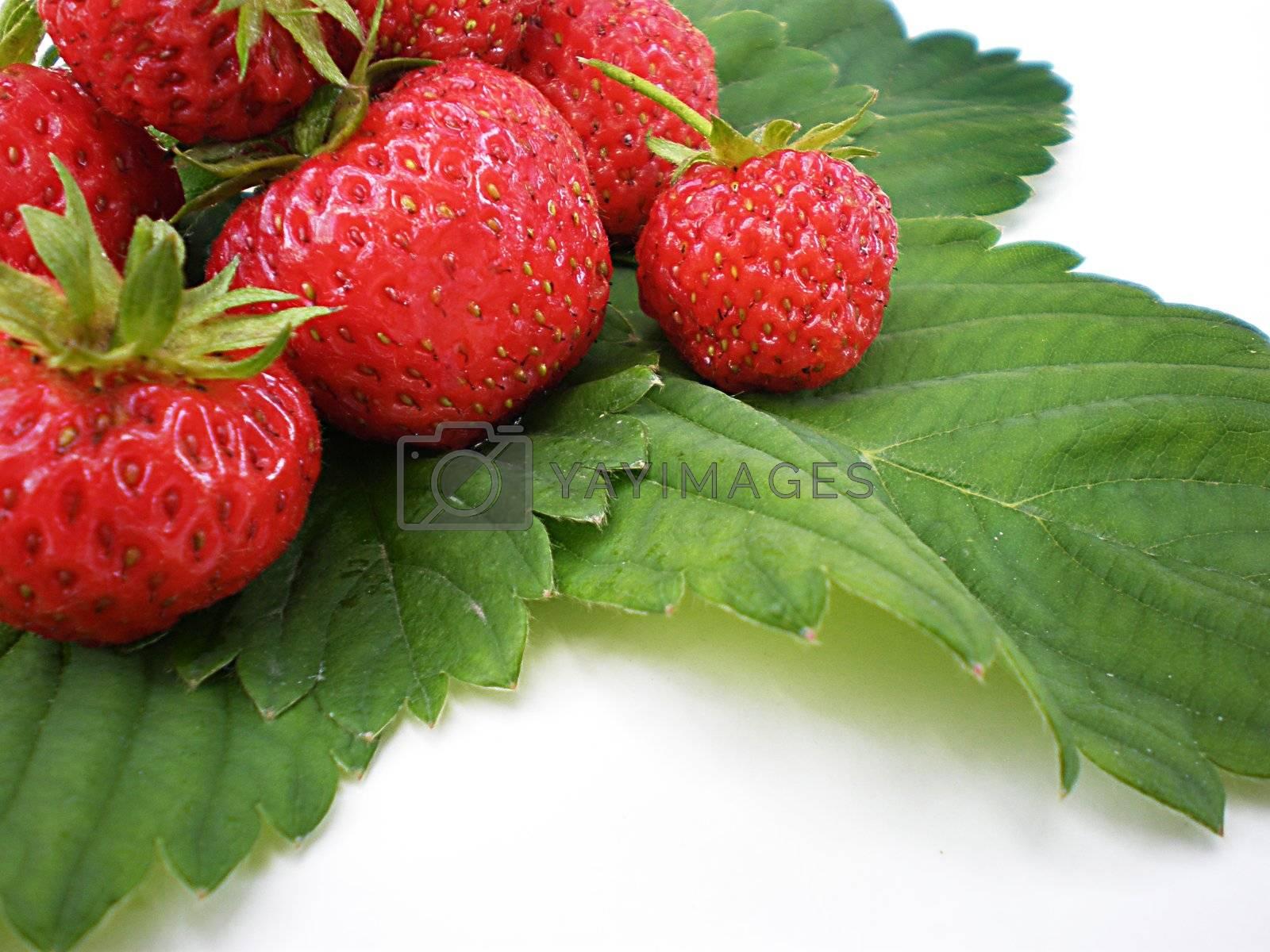 Royalty free image of strawberries by Dessie_bg