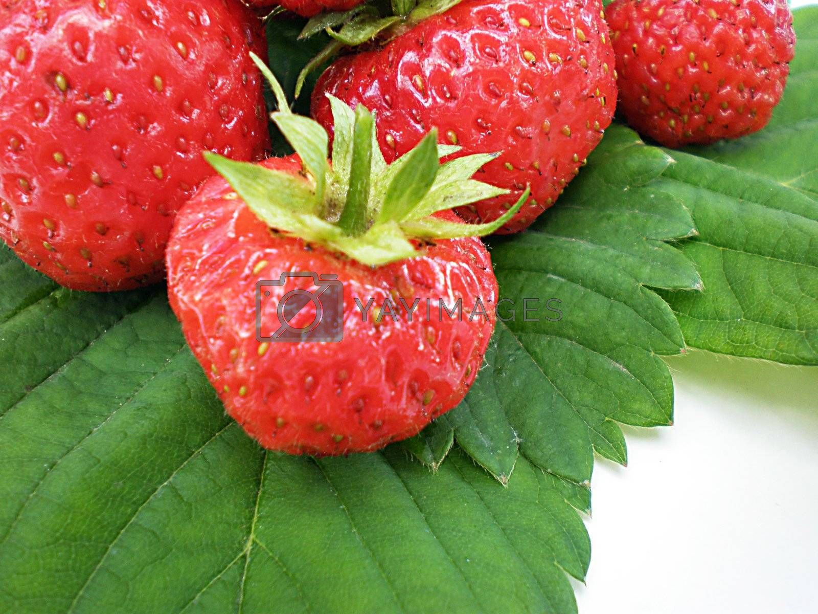 Royalty free image of strawberries by Dessie_bg