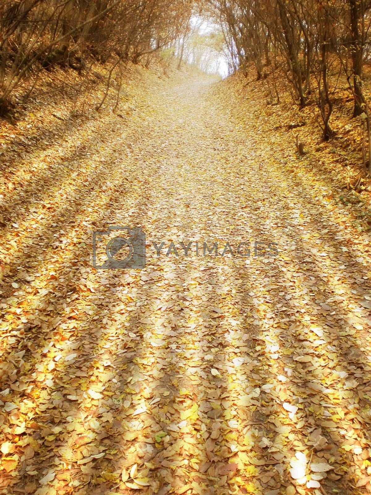 Royalty free image of autumn by Dessie_bg