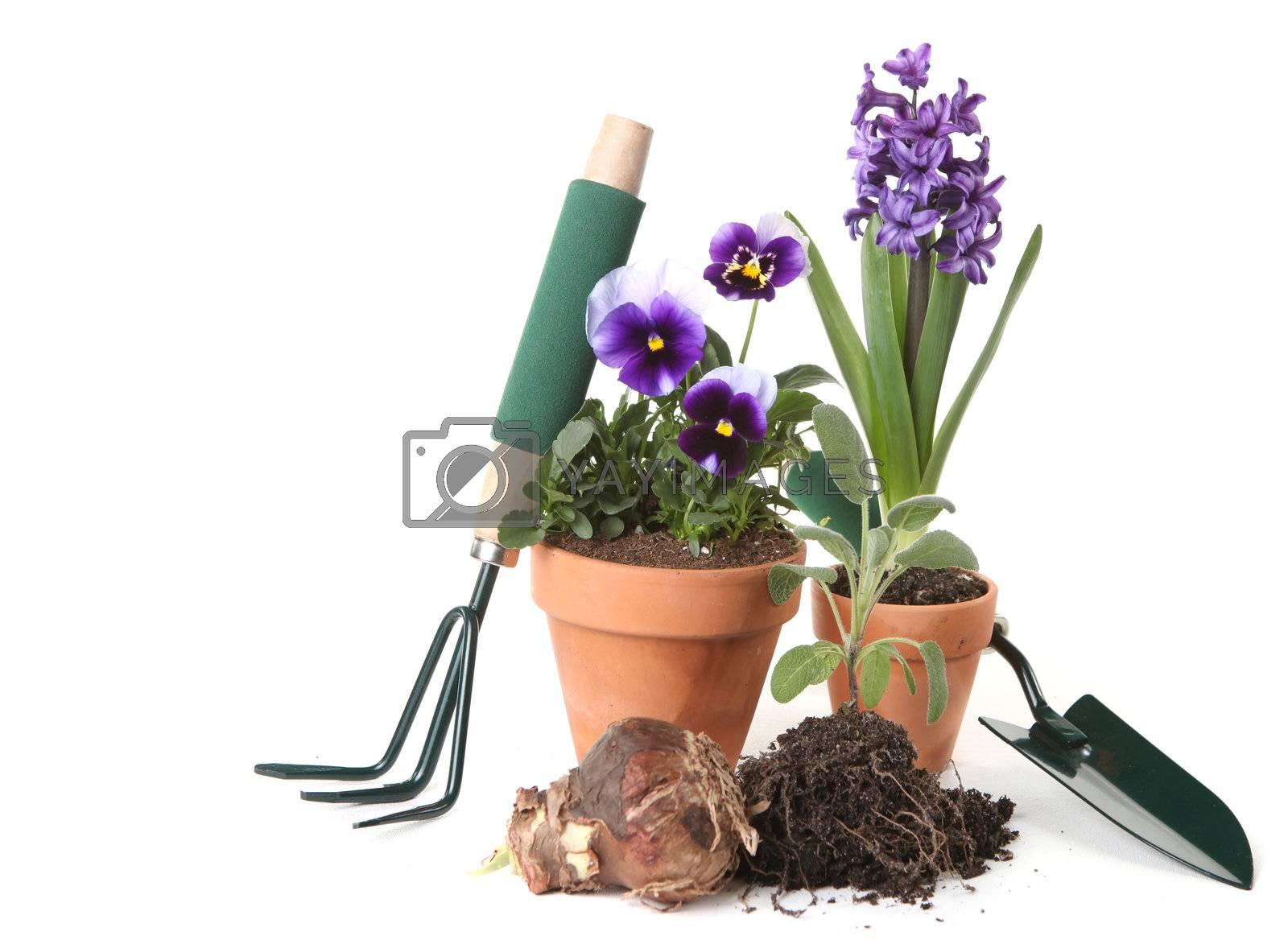 Royalty free image of Potted New Plantings Celebrating Springtime Gardening by tobkatrina