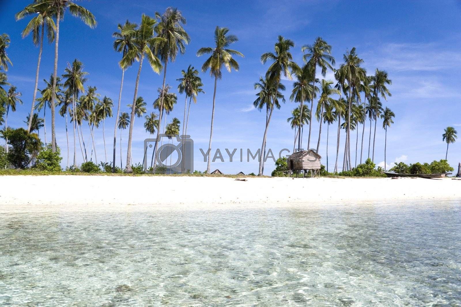 Royalty free image of Tropical Island Paradise by shariffc