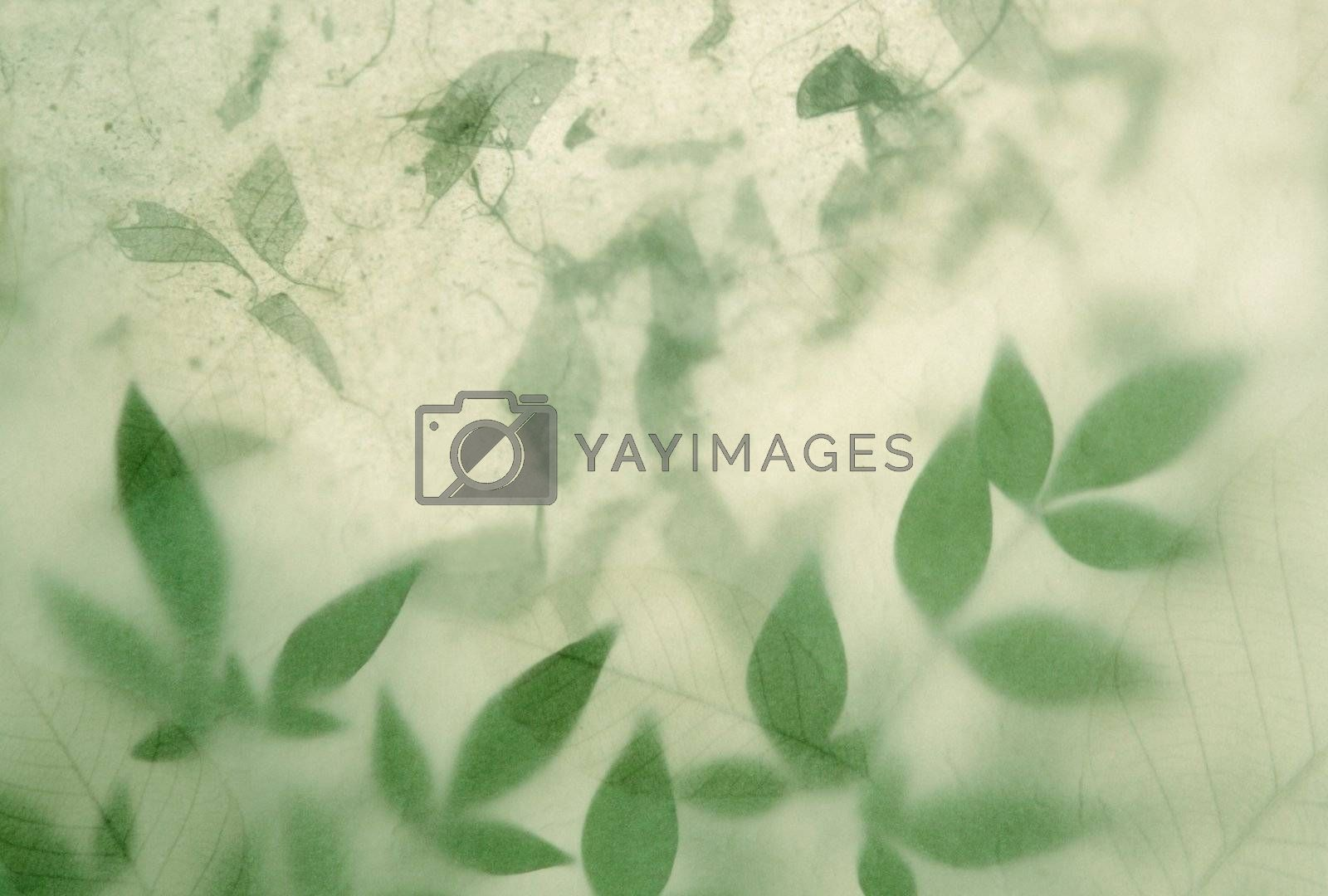 Royalty free image of leaves on leaves by nebari