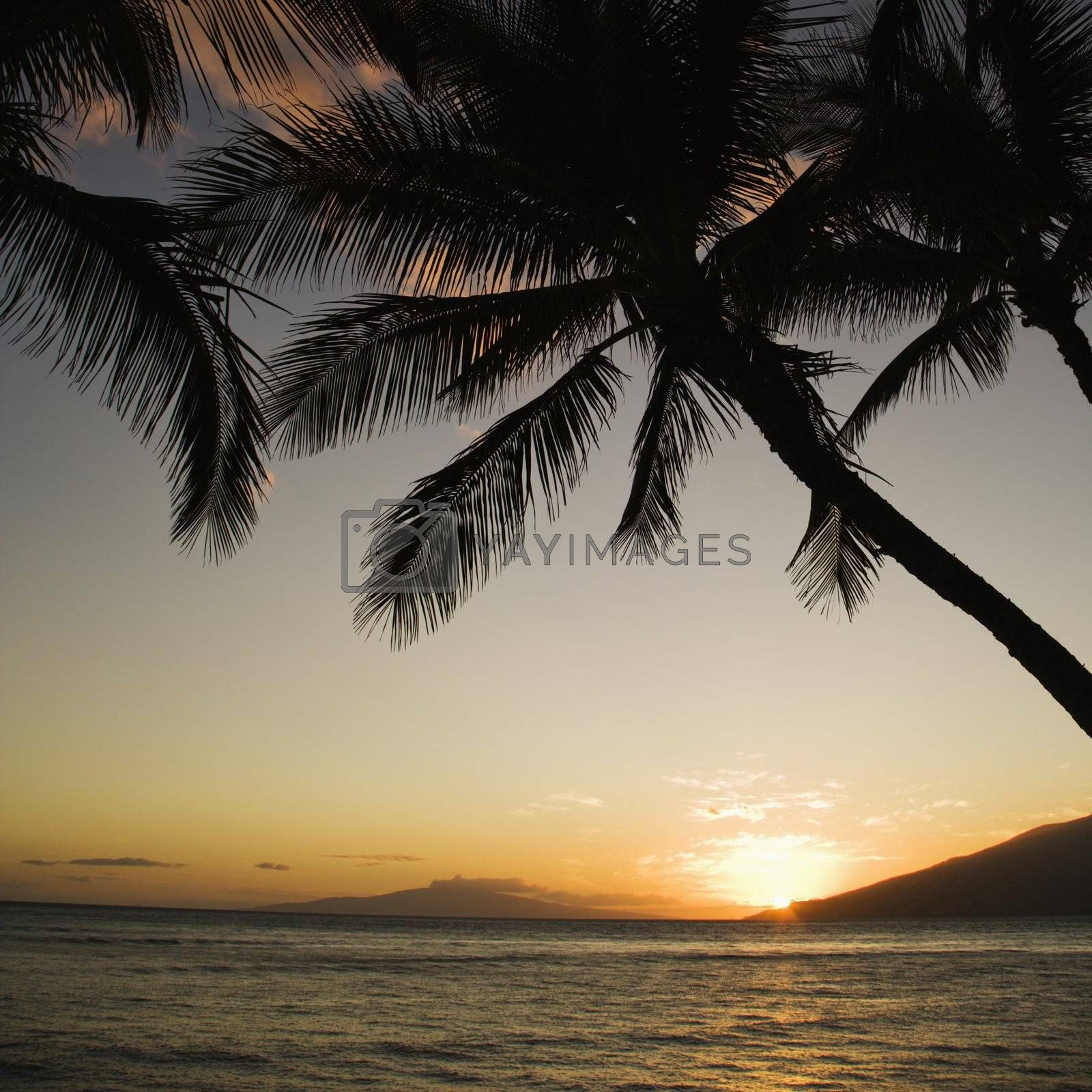 Sunset over Pacific ocean with silhouetted palm trees.