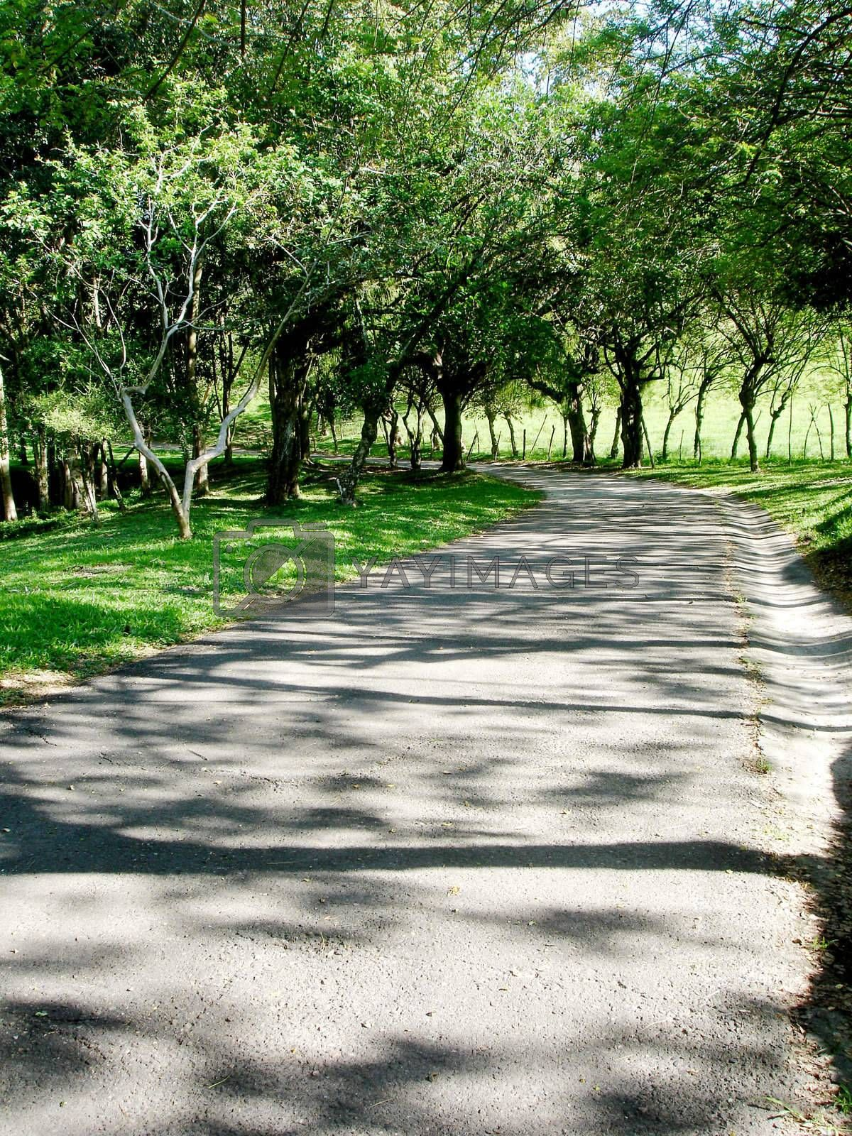 landscape of way whit tree shadows, photo image