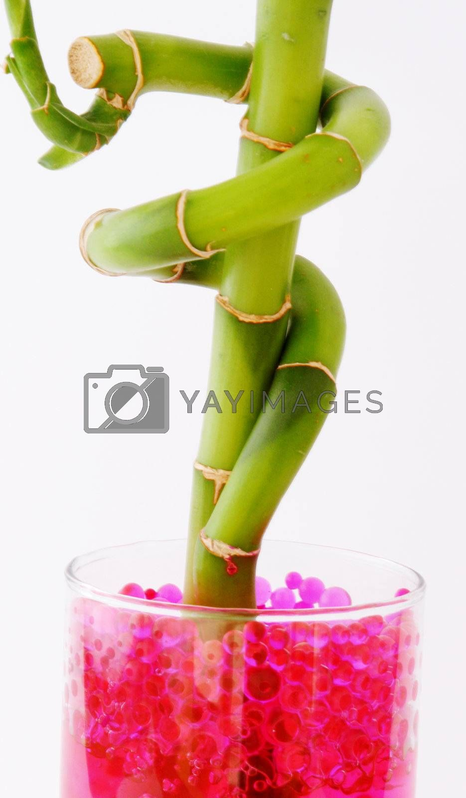natural plant colors with green and fuchsia on white background