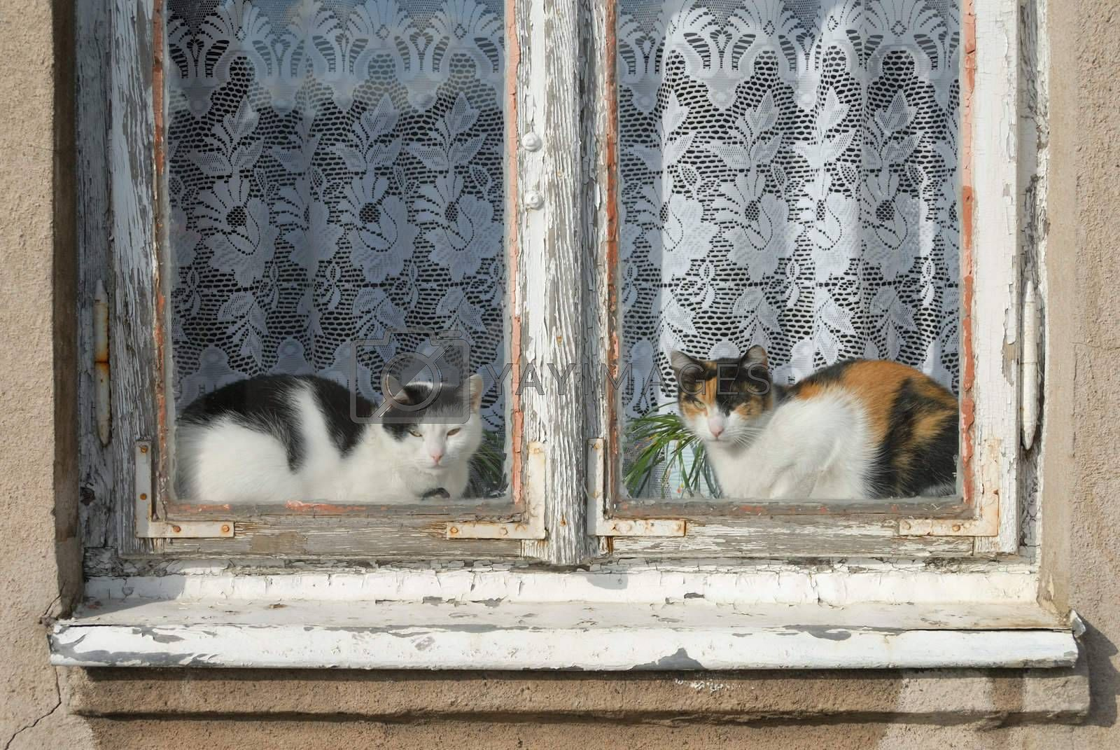 Two cats sitting in a window and looking through