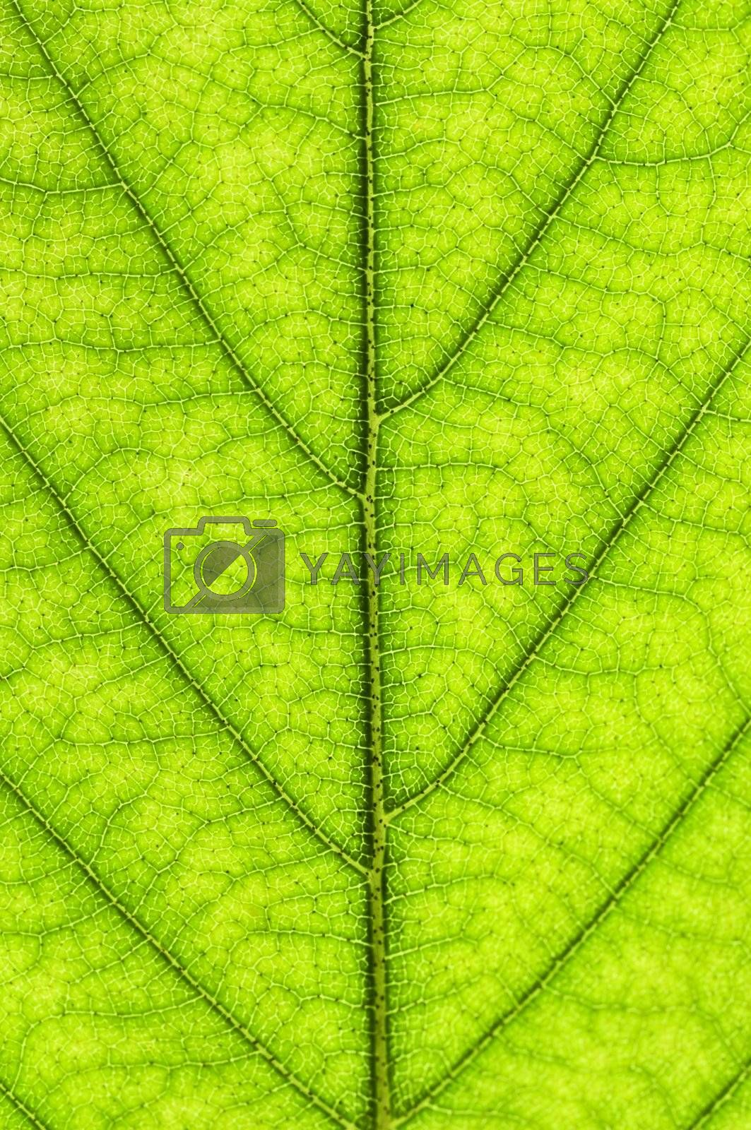 Green leaf texture by elenathewise