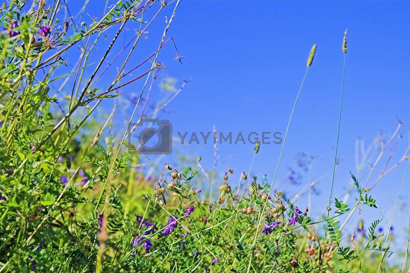 wild plants by simfan