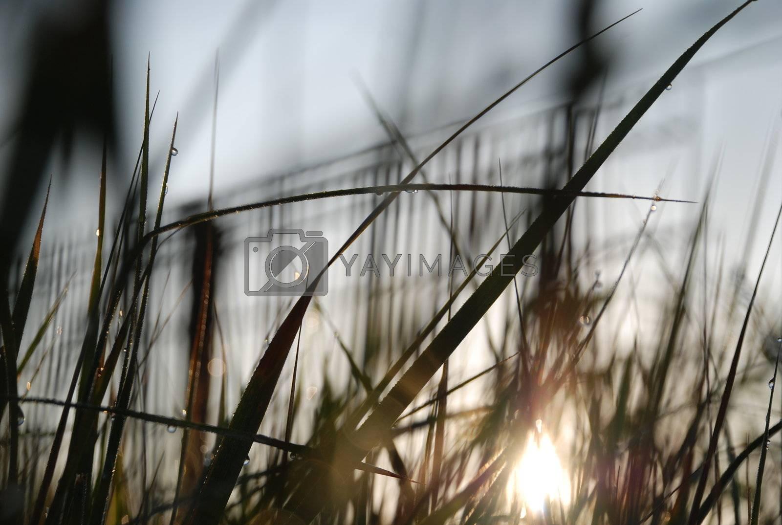 Royalty free image of sunrise by ArtemPasha