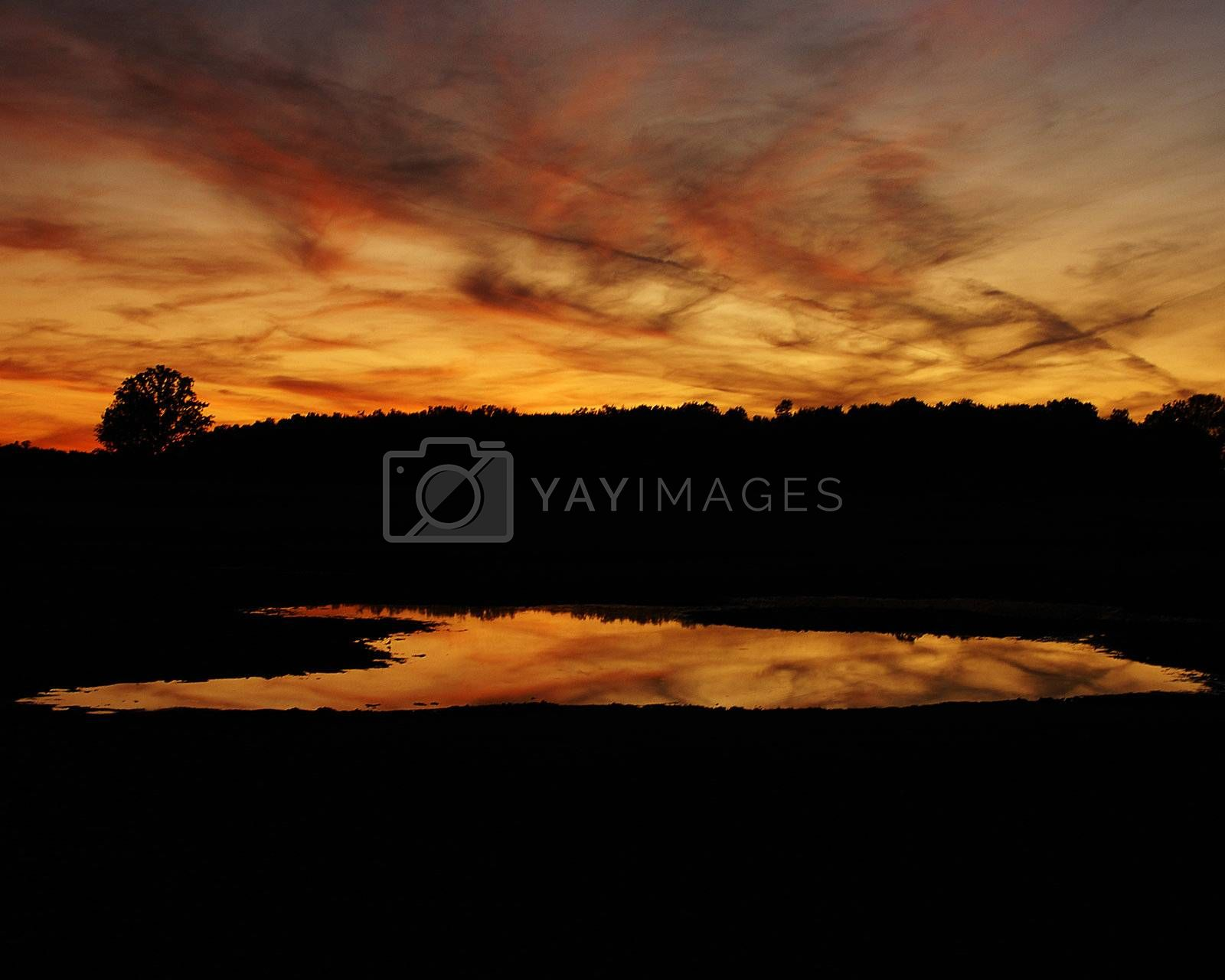 Royalty free image of Sunset by chimmi