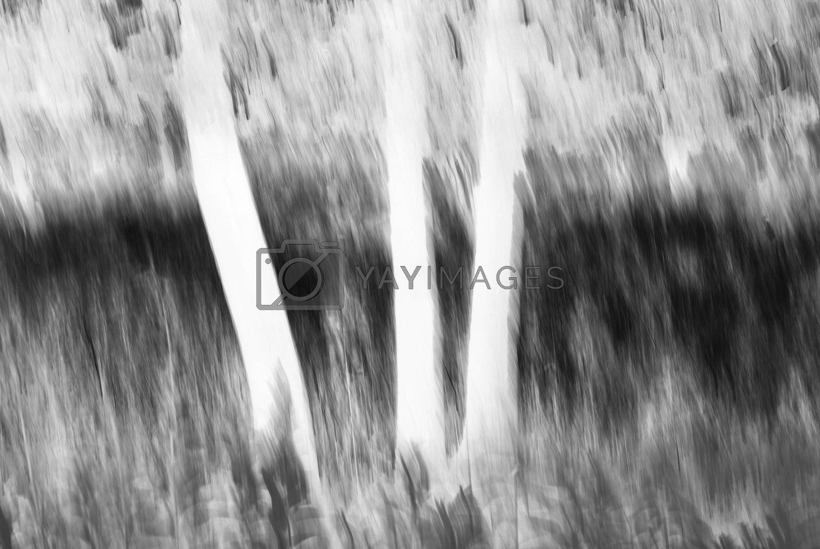 Royalty free image of Abstract Tree 3 by chimmi