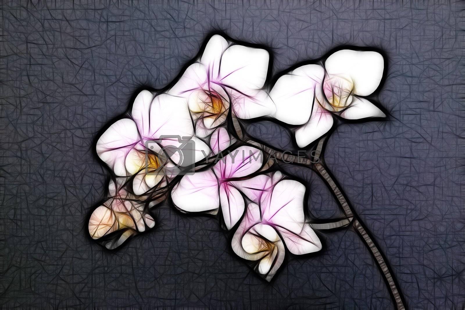 Royalty free image of Minature Orchid by zambezi