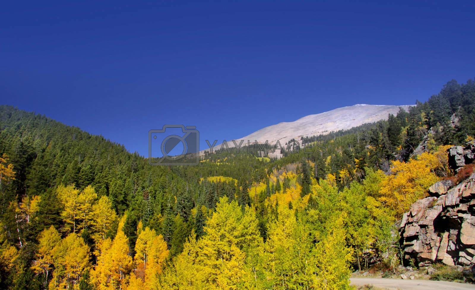 Royalty free image of Autumn  in Colorado by snehit