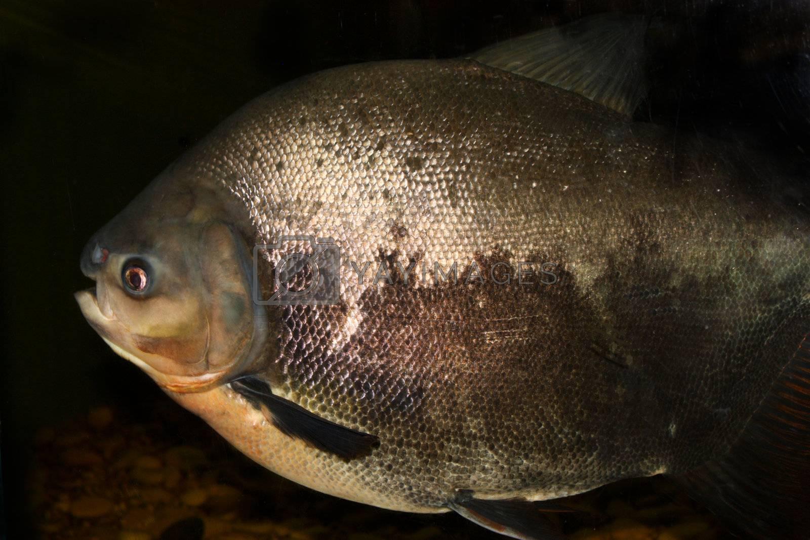 Royalty free image of fish by Lyudmila