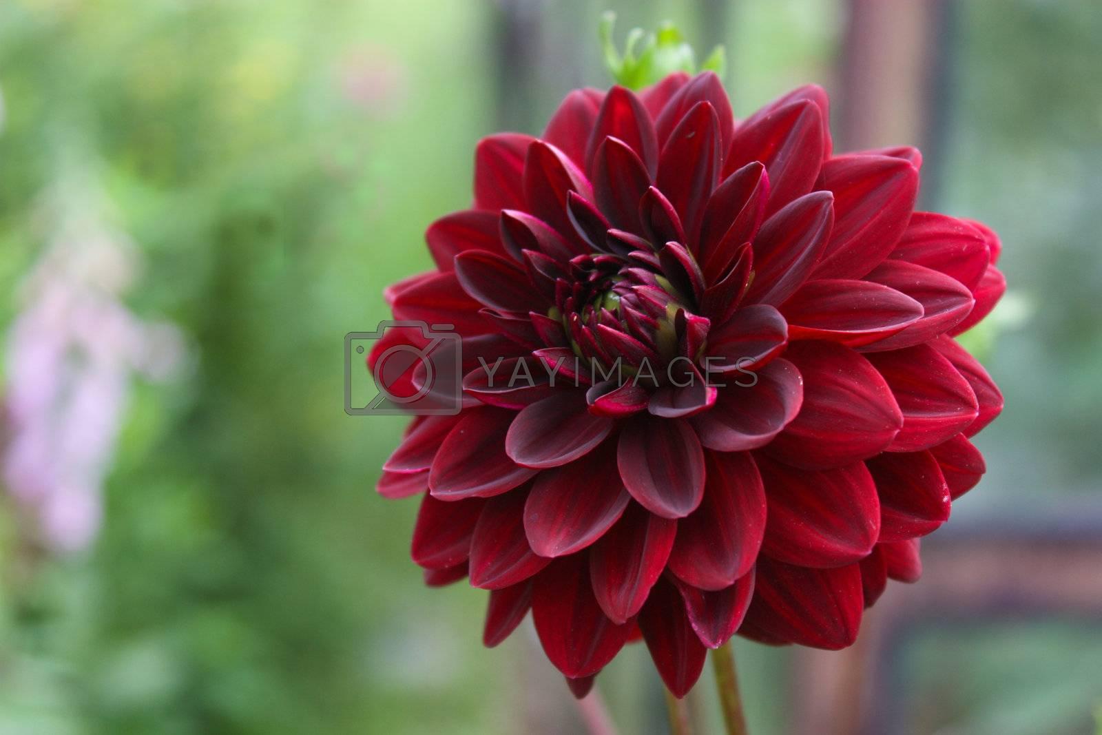 Royalty free image of flower by Lyudmila