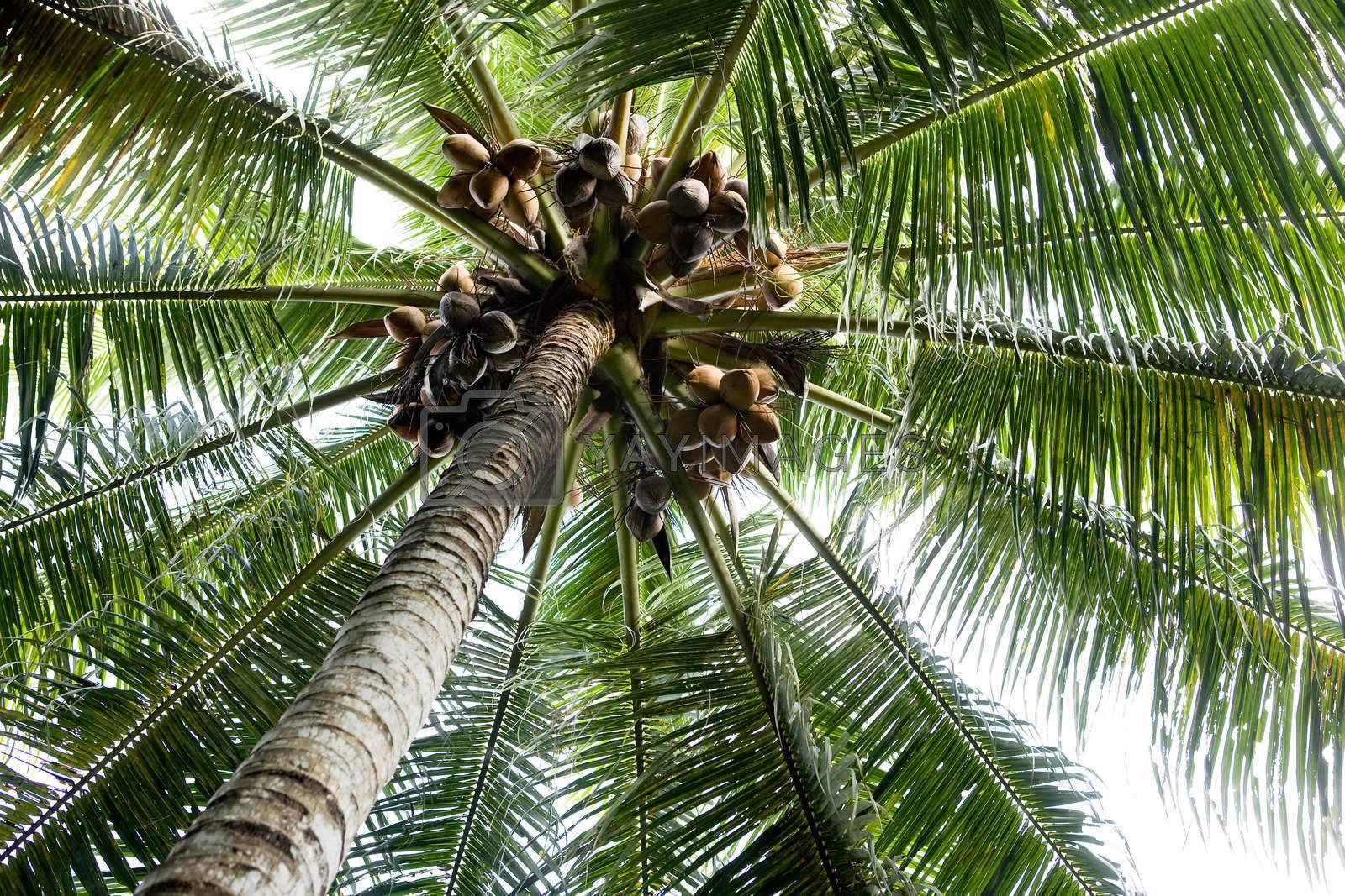Palm Tree Background by leaf
