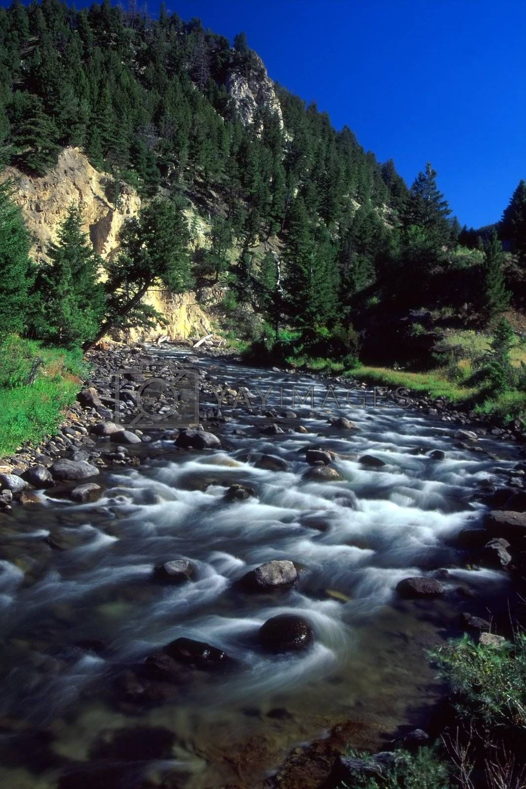 Royalty free image of Gardner River - Yellowstone National Park by Wirepec