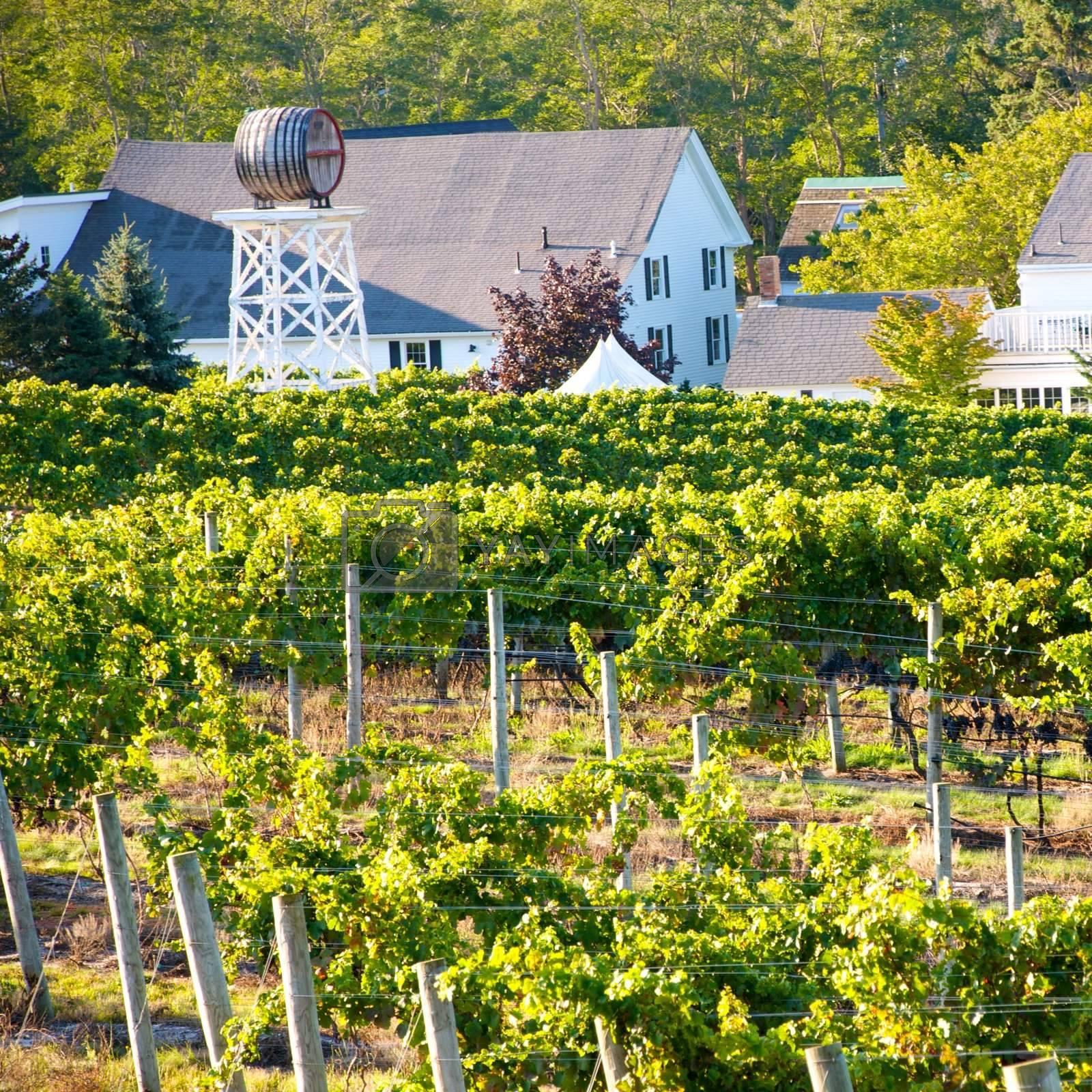 Truro Vineyards of Cape Cod, Massachusettes