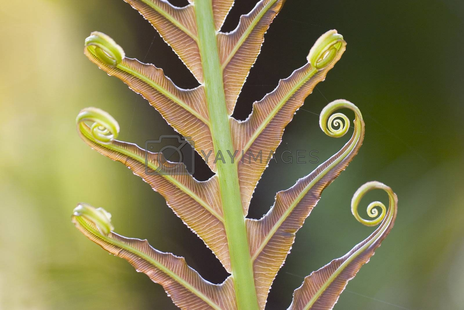 Close-up of a giant fern on a sunny morning in Brazil