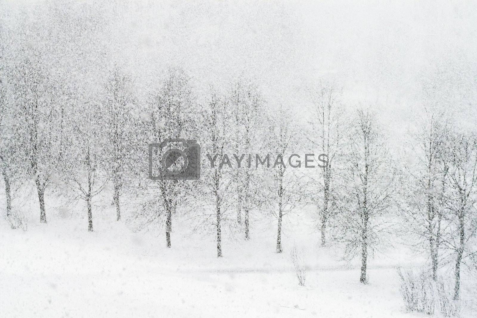 Heavy snowfalling in city park