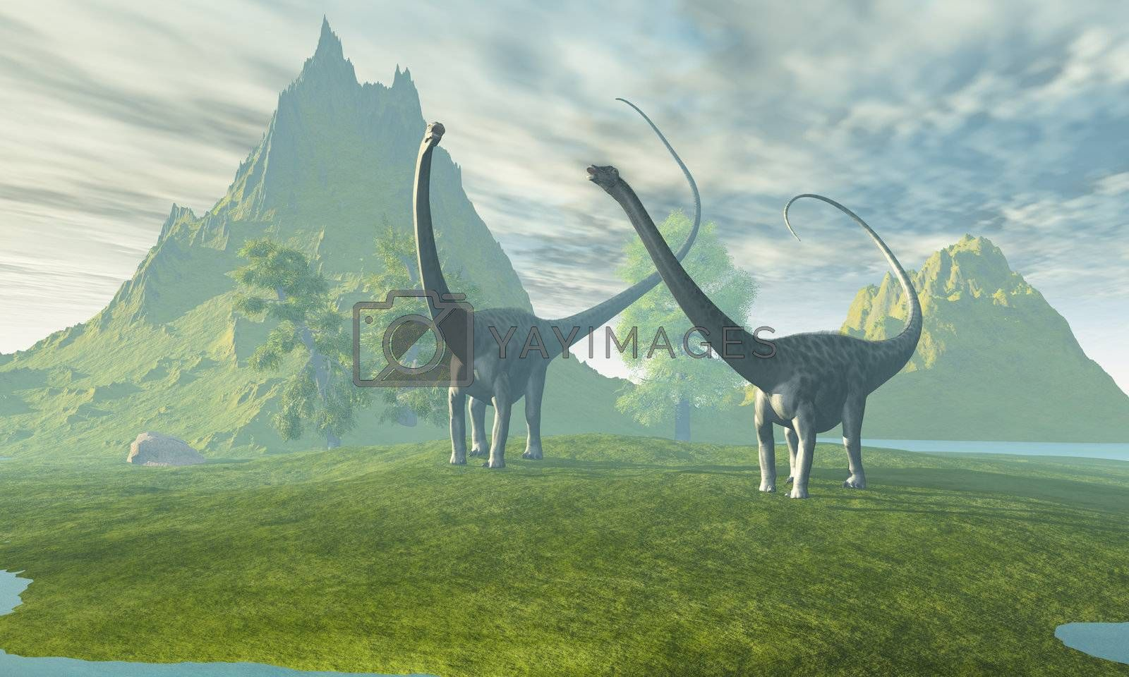 Two Diplodocus dinosaurs walk together in the afternoon in the prehistoric age.