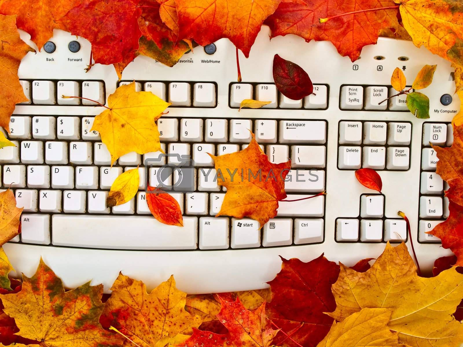 Photo of the keyboard in the bright autumn leaves