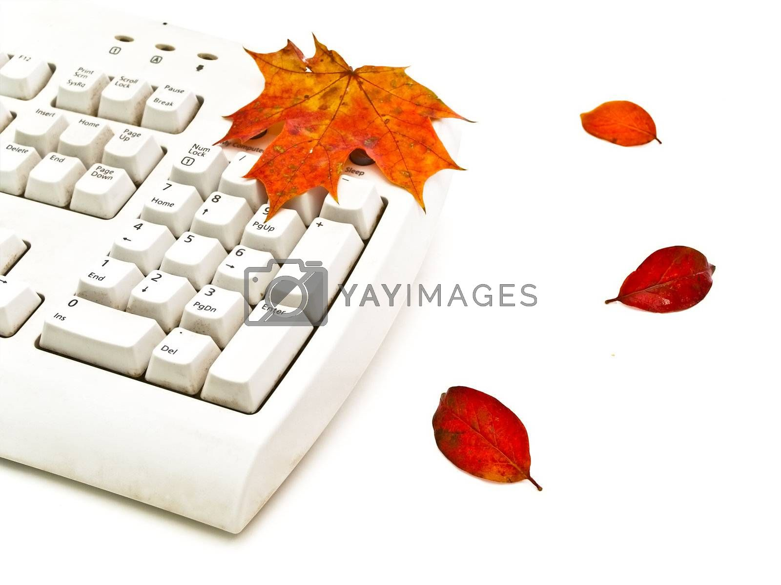 Photo of the keyboard whith  bright autumn leaves