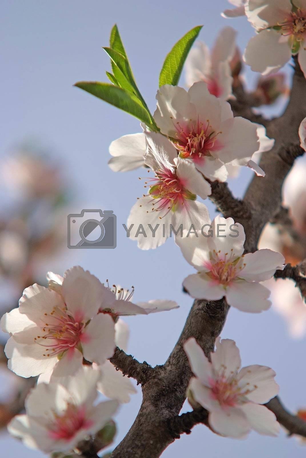 nature romance - spring bloom