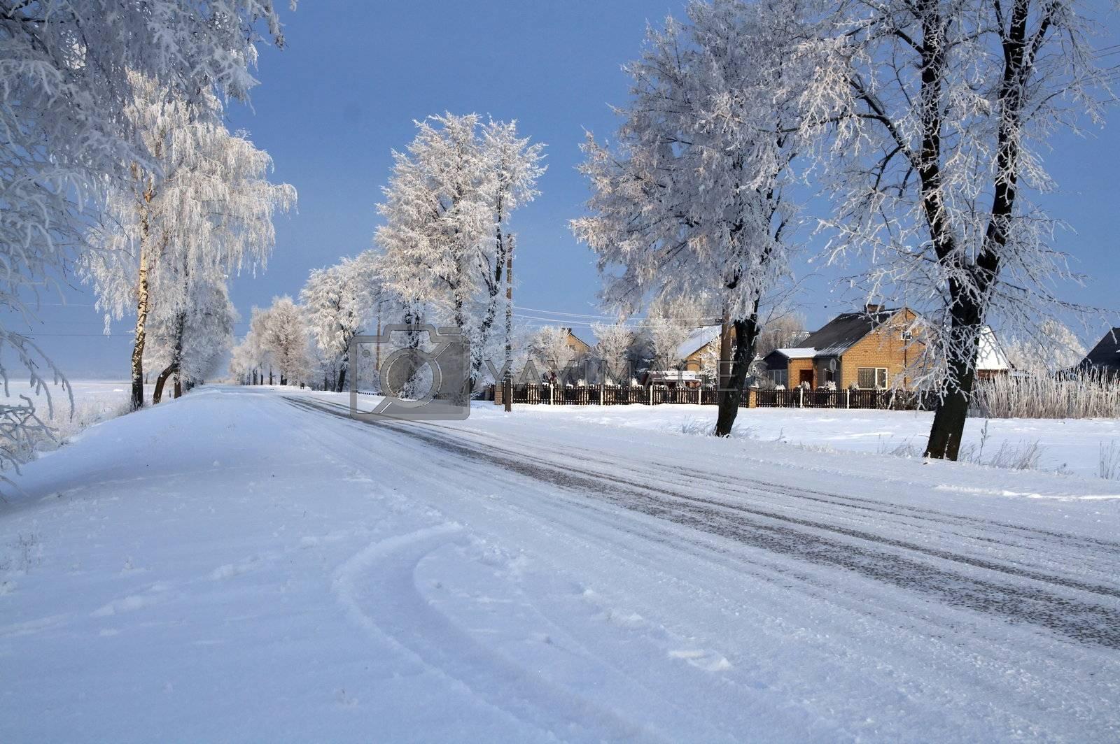 Road in snow - winter scene