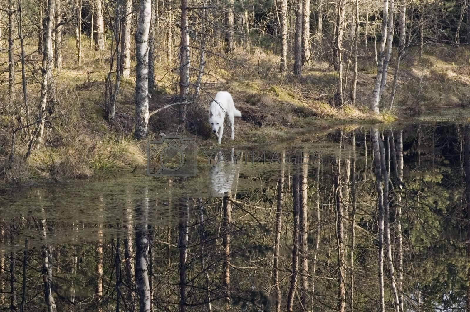 landscape at wood lake